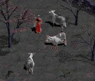 Tristram Cows